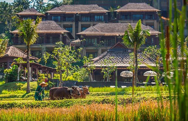 Rice Paddy at Mandapa