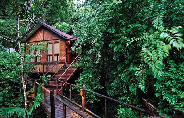 Jungle Luxe Sarang