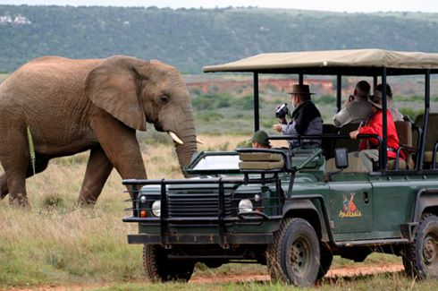 Elephant & Land Rover