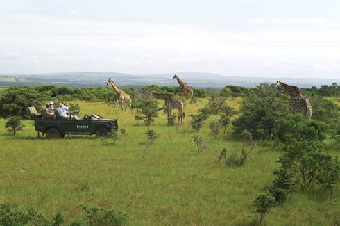 Giraffe & Vehicle