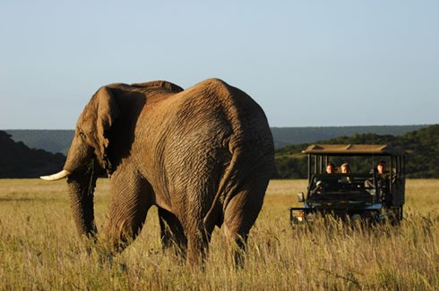 Game Drive & Ellie