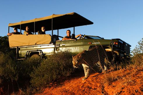Game Drive & Leopard
