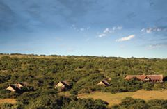 Amakhala Game Reserve Bush Lodge Tented