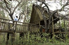 Jacis Tree Lodge